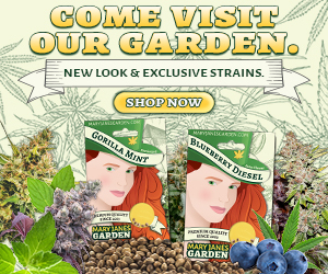 Mary Jane's Garden - Visit Our Garden 300x250
