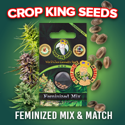 Feminized Mix & Match