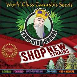 Crop King Seeds (COM)Shop New Strains World Class Cannabis Seeds 250x250