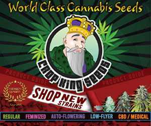 Crop King Seeds (COM) - Shop New Strains World Class Cannabis Seeds 300x250