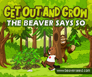 Beaver Seeds - Get Out and Grow Spring Sasquatch 300x250